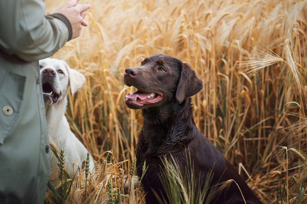 hundeschule-sommertraining-teamcoaching